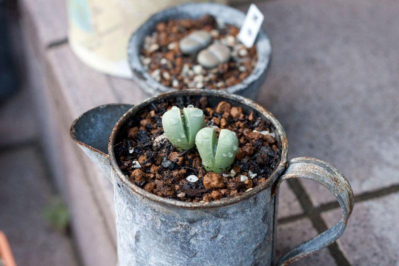 ロハスフェスタと植物の植え替え