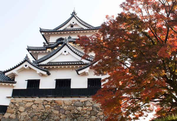 彦根城へ紅葉に行ってきました